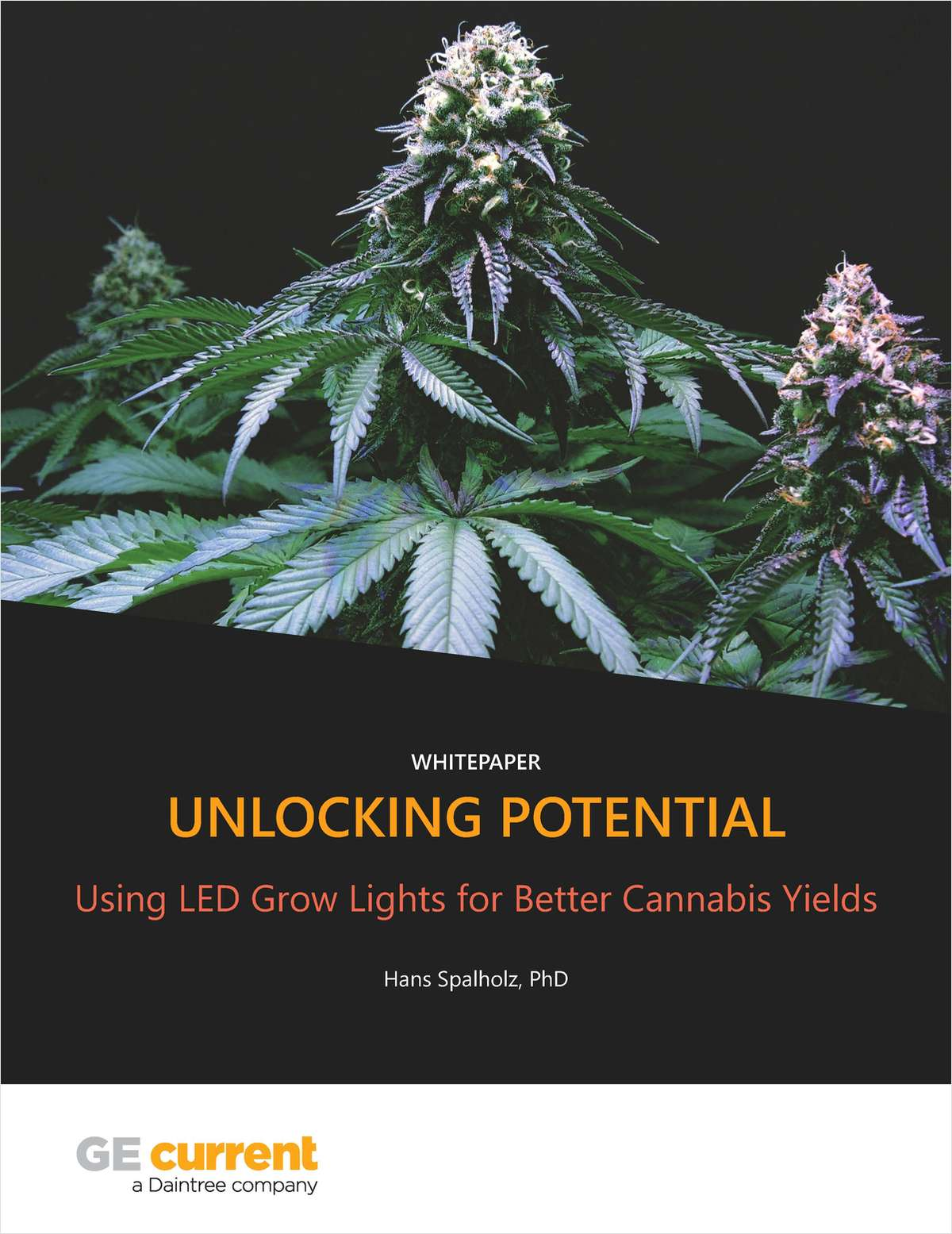 Unlocking Potential: Using LED Grow Lights for Better Cannabis Yields