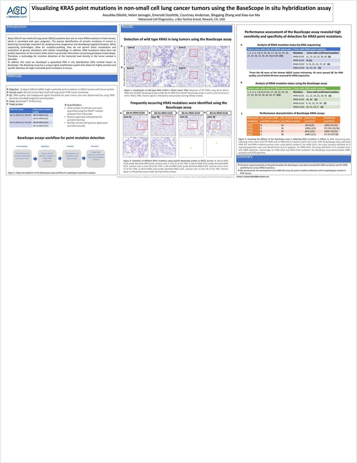 Visualize KRAS Point Mutations Using BaseScope ISH