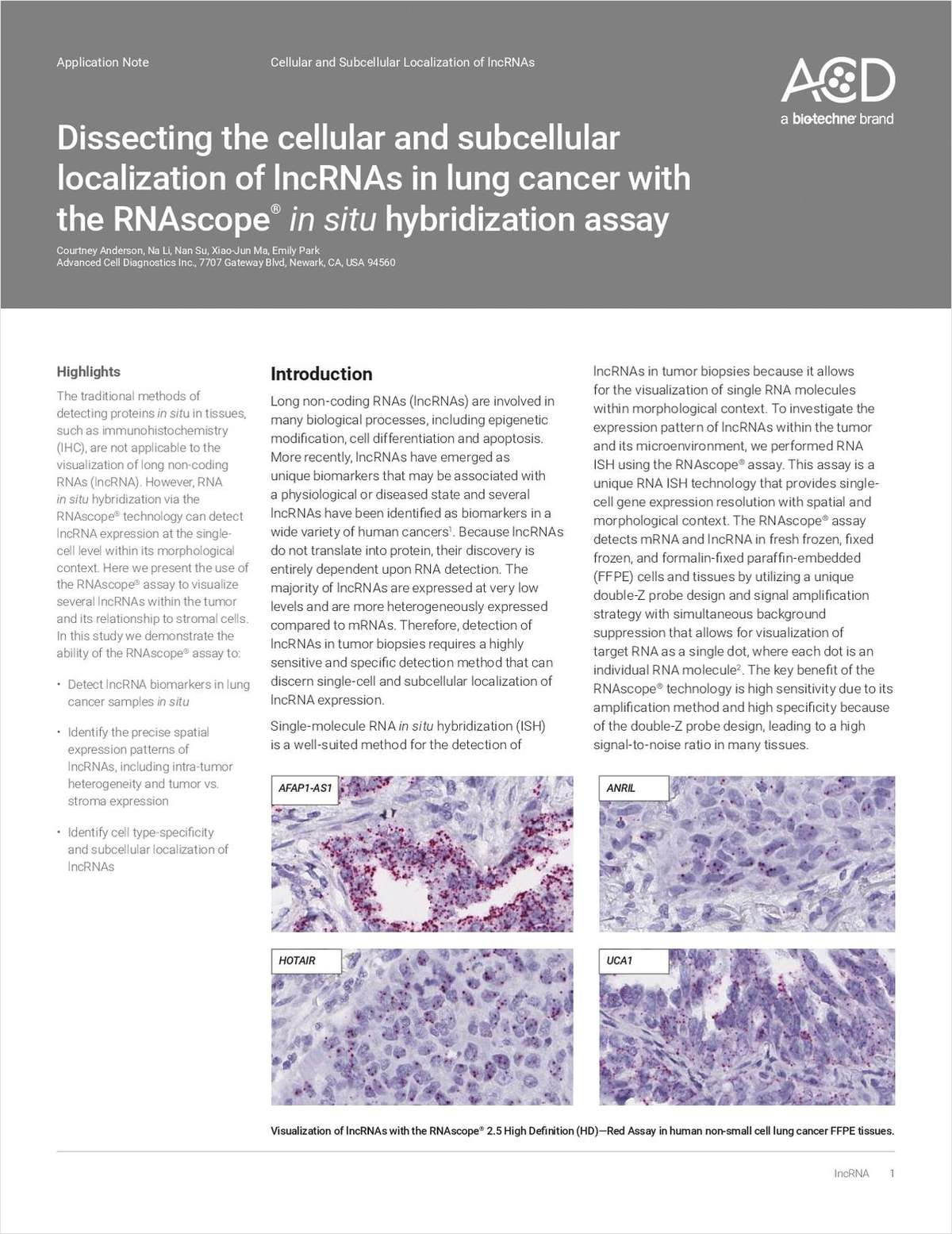 Dissecting the Cellular and Subcellular Localization of lncRNAs in Lung Cancer with the RNAscope In Situ Hybridization Assay