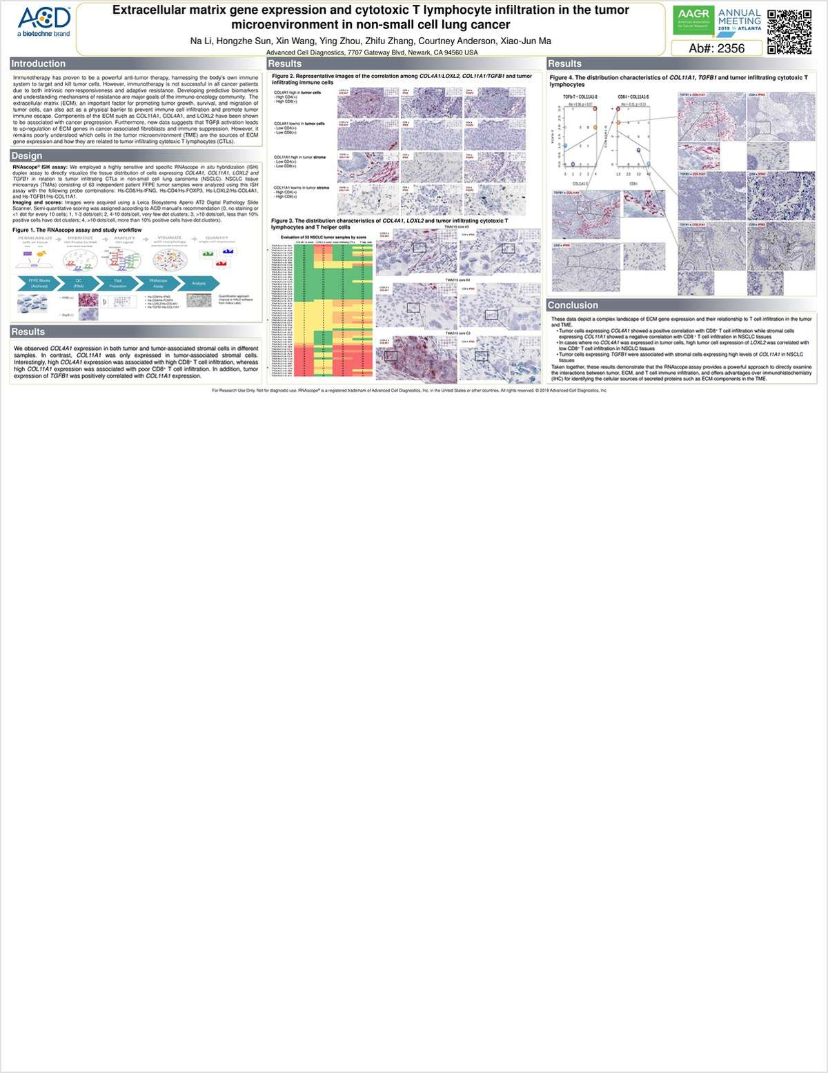 Extracellular Matrix Gene Expression and Cytotoxic T Lymphocyte Infiltration in the Tumor Microenvironment in Non-Small Cell Lung Cancer