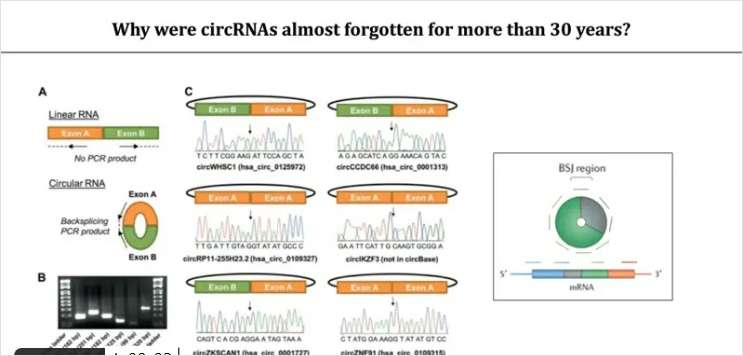 Spatial Expression Analyses Elucidate Mechanisms of circRNAs in Cancer