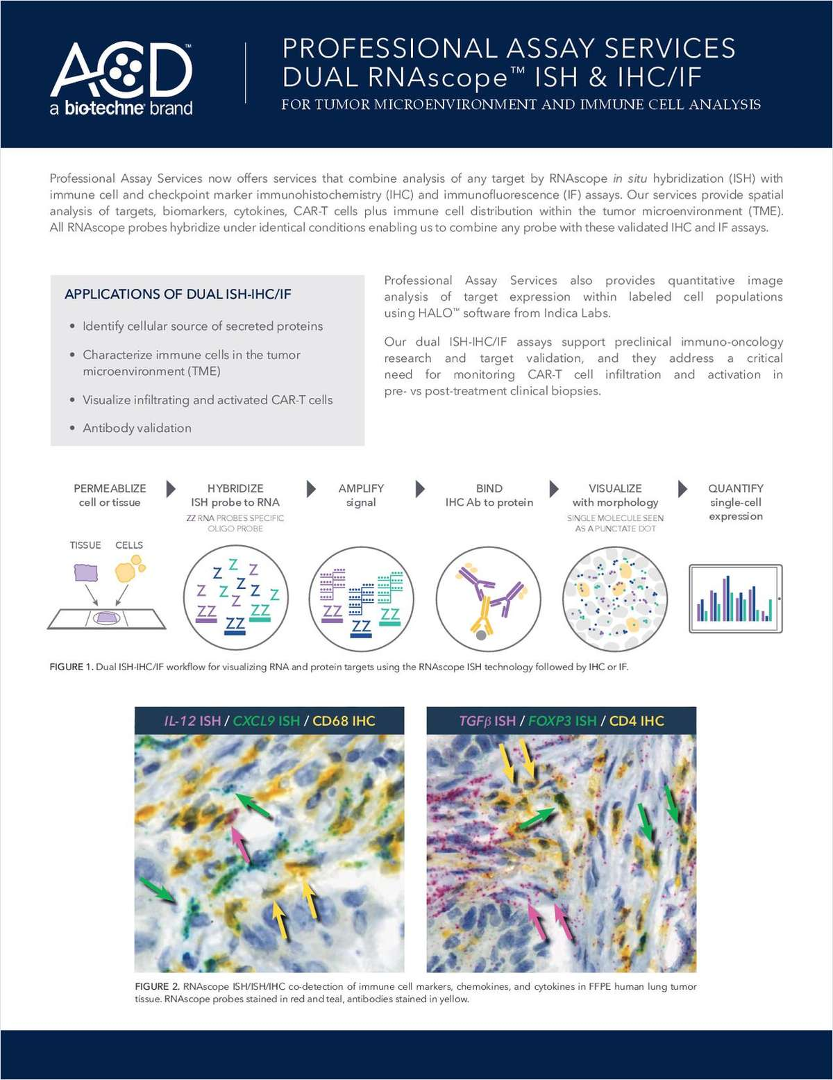 Professional Assay Services Dual RNAscope ISH & IHC/IF for Tumor Microenvironment and Immune Cell Analysis