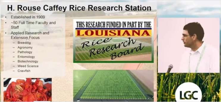 Utilization and Implementation of Molecular Markers in a Public Rice Breeding Program