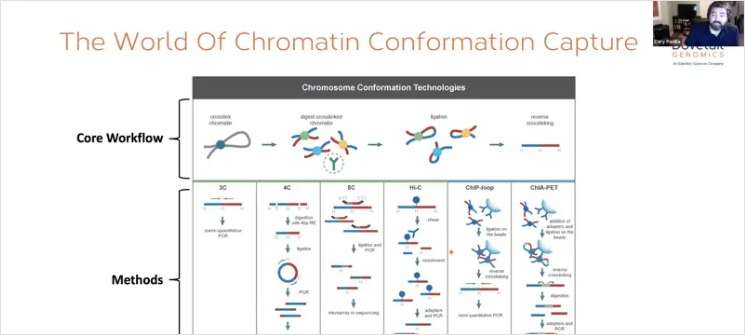 Life after ChIP-seq: Genome Conformation Enhances our View of the Regulatory Landscape