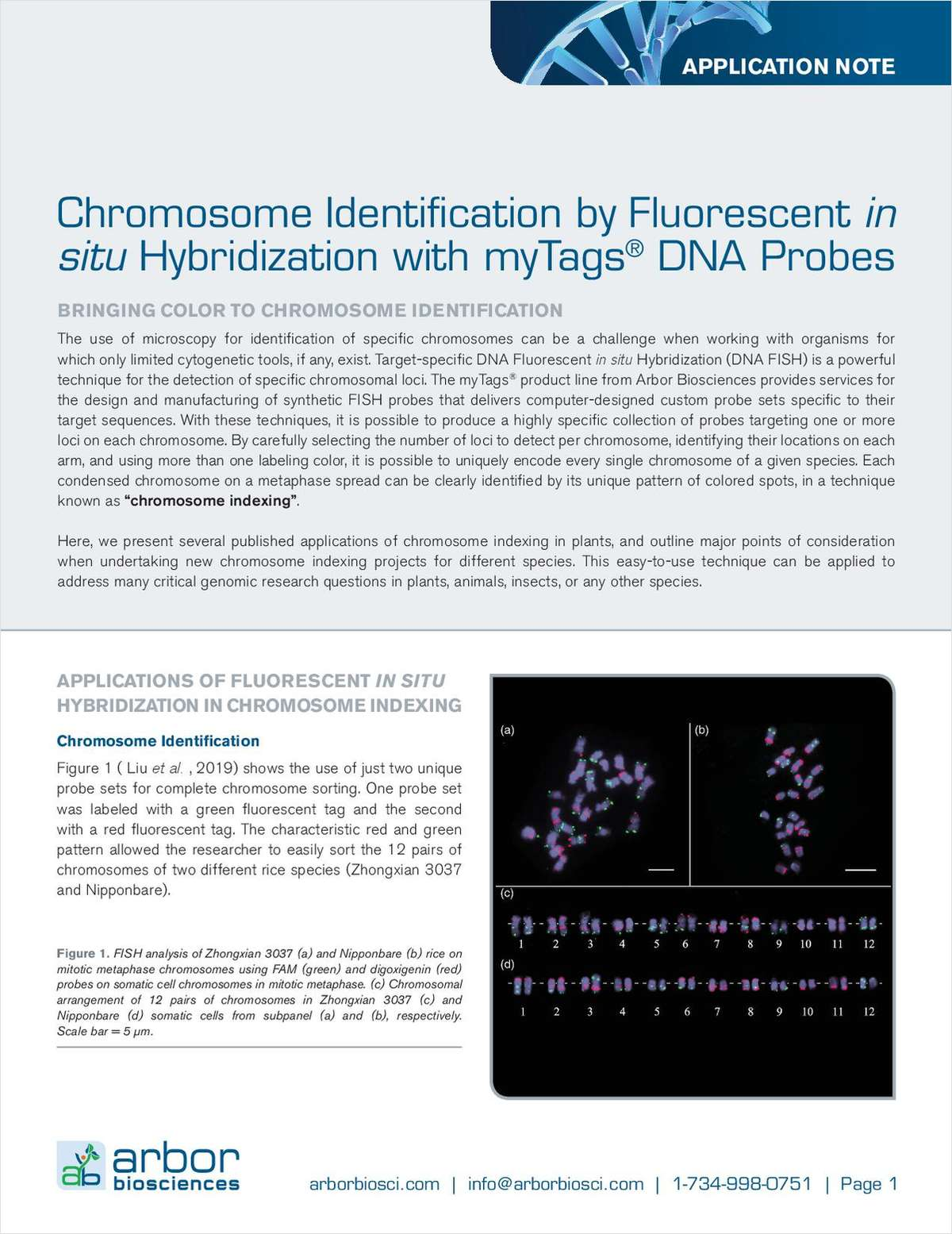 Chromosome Identification by Fluorescent in situ Hybridization with myTags DNA Probes