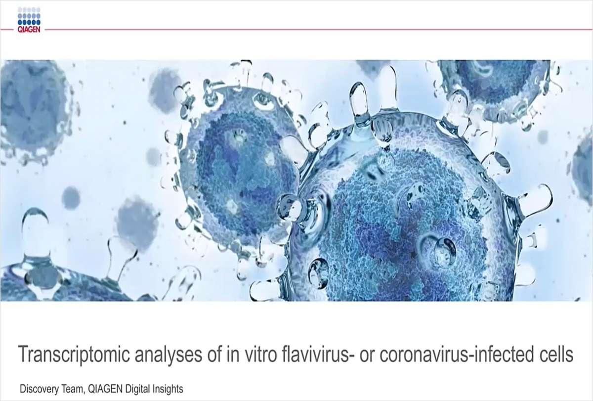Transcriptomic Analyses of In Vitro Flavivirus- or Coronavirus-infected Cell Lines