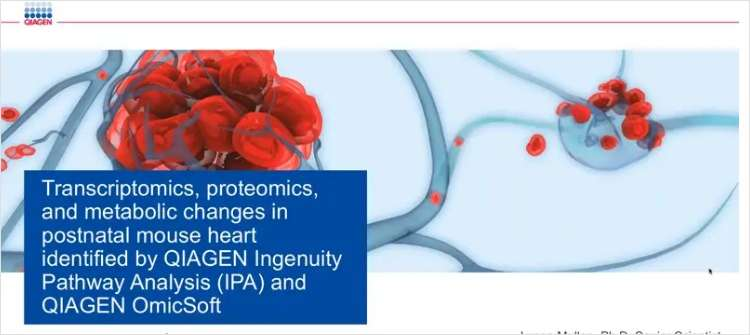 Multiomic Changes in the Postnatal Mouse Heart Identified by QIAGEN Ingenuity Pathway Analysis (IPA) and QIAGEN OmicSoft