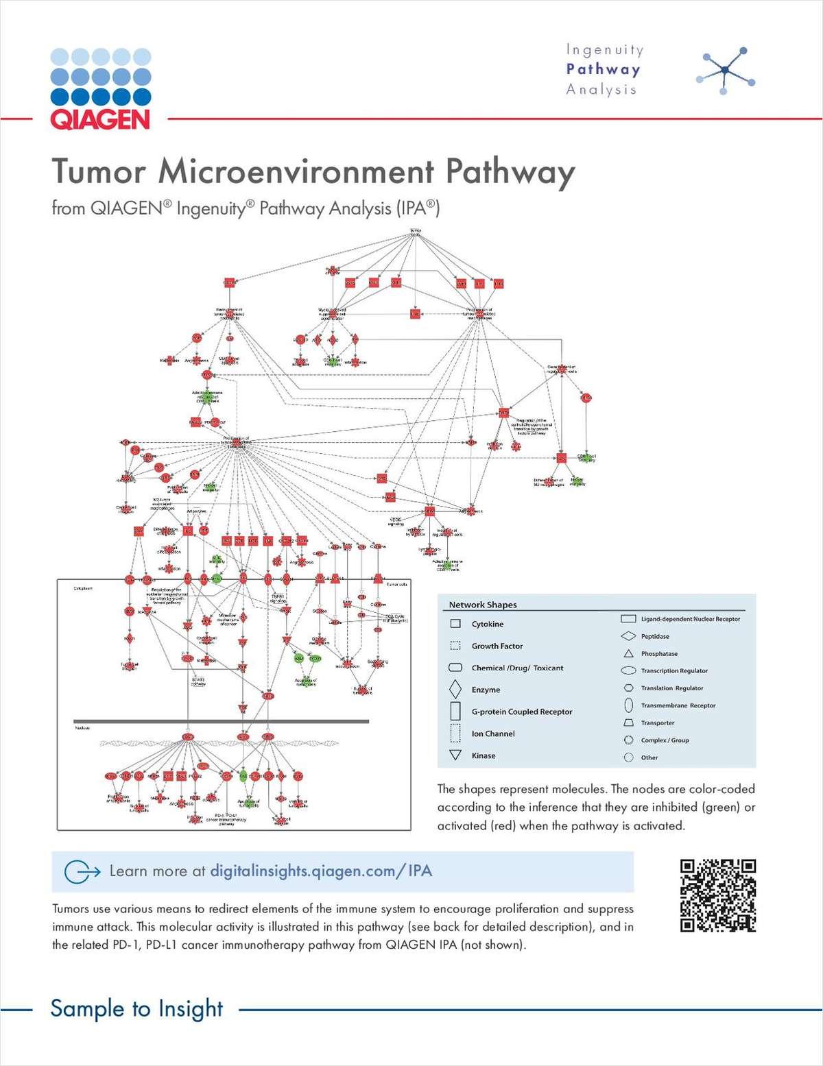 Tumor Microenvironment Pathway