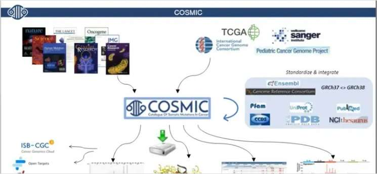 COSMIC: Describing Millions of Somatic Mutations at High Resolution Across Forms of Cancer Underpins Precision Oncology Research