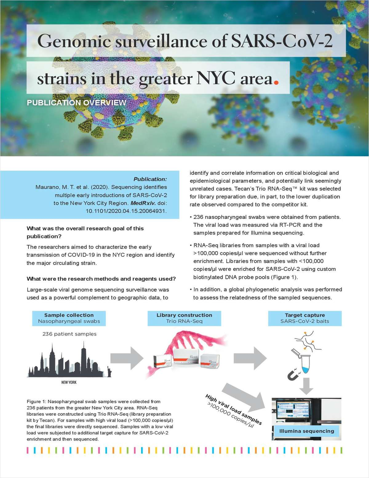 Genomic Surveillance of SARS-CoV-2 Strains in the Greater NYC Area