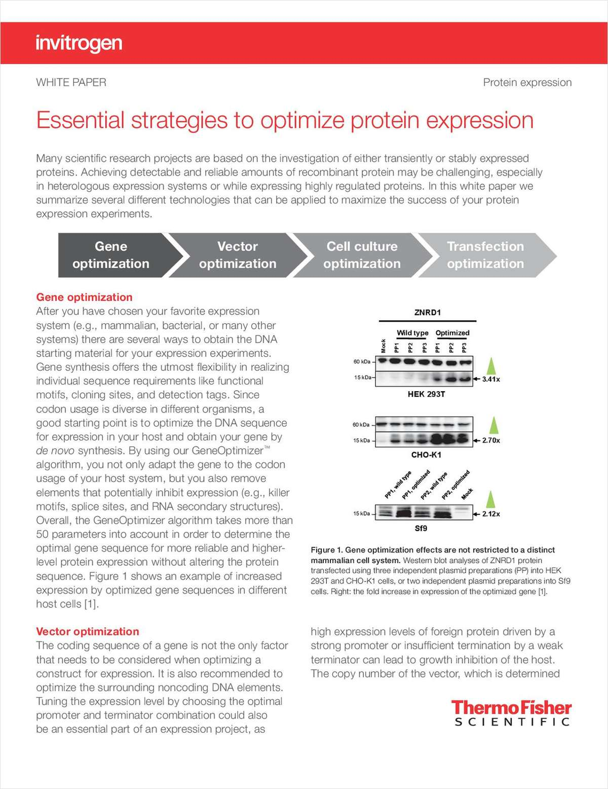 Essential Strategies to Optimize Protein Expression